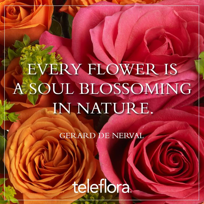 Do You Know When To Plant Outside After Mothers Day Teleflora Blog