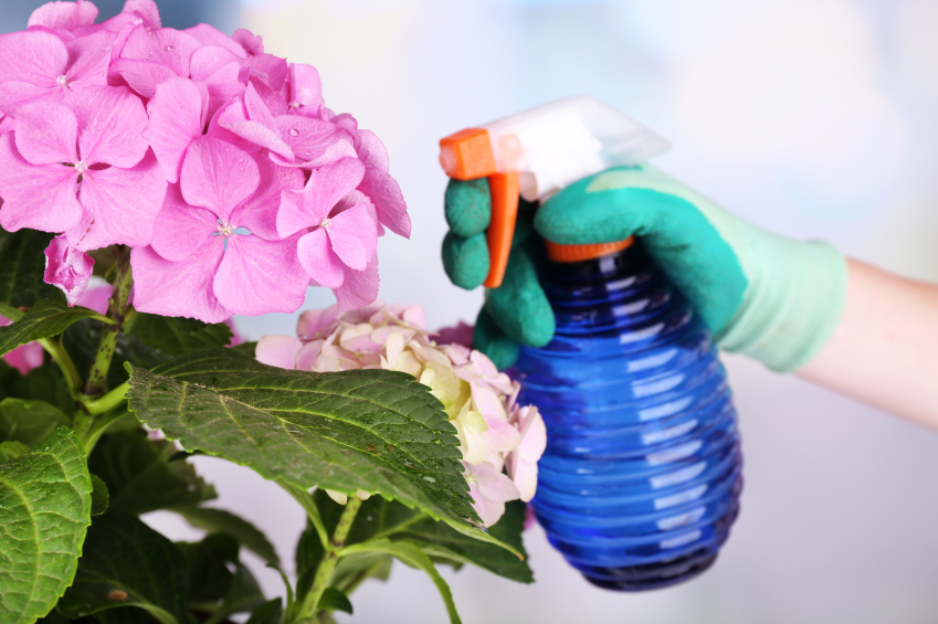 How to Keep Your Flowers Fresh and Fabulous