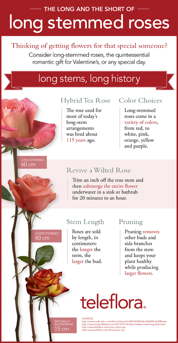 infographic on long stemmed roses