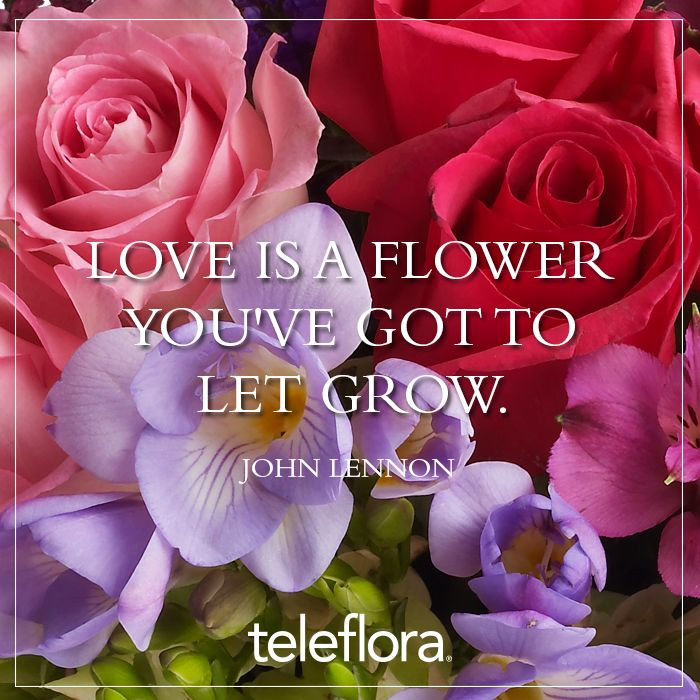 John Lennon quote Love Is A Flower You've got To Let It Grow