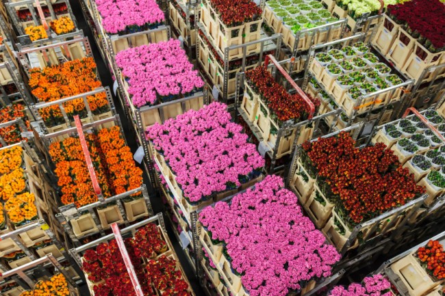 37 million flowers imported through LAX  during Valentine's season