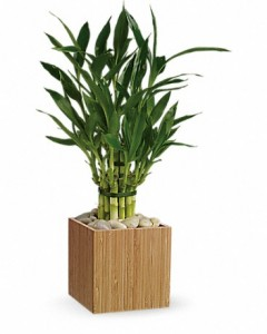 low_maintenance_flowers_for_busy_professionals_bamboo