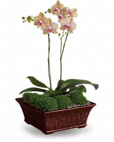 orchid in potted vase