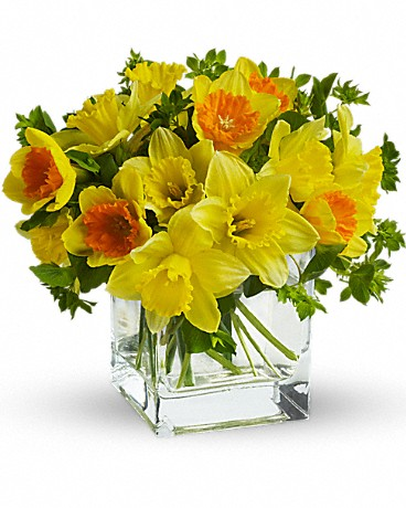 daffodils in clear vase