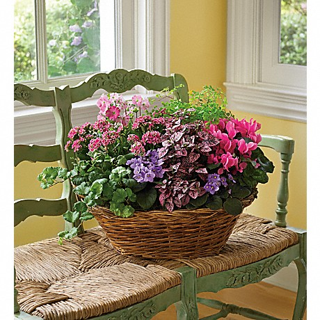 Bright colored flowers in wicker basket
