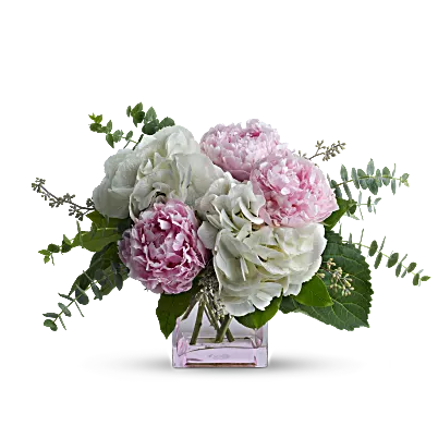 pink and white peonies in vase
