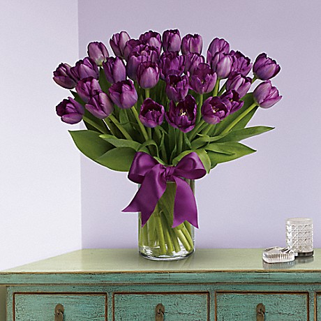 purple tulips in clear vase