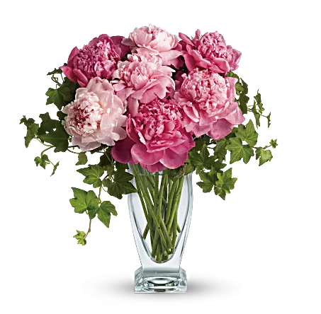pink peonies in clear vase