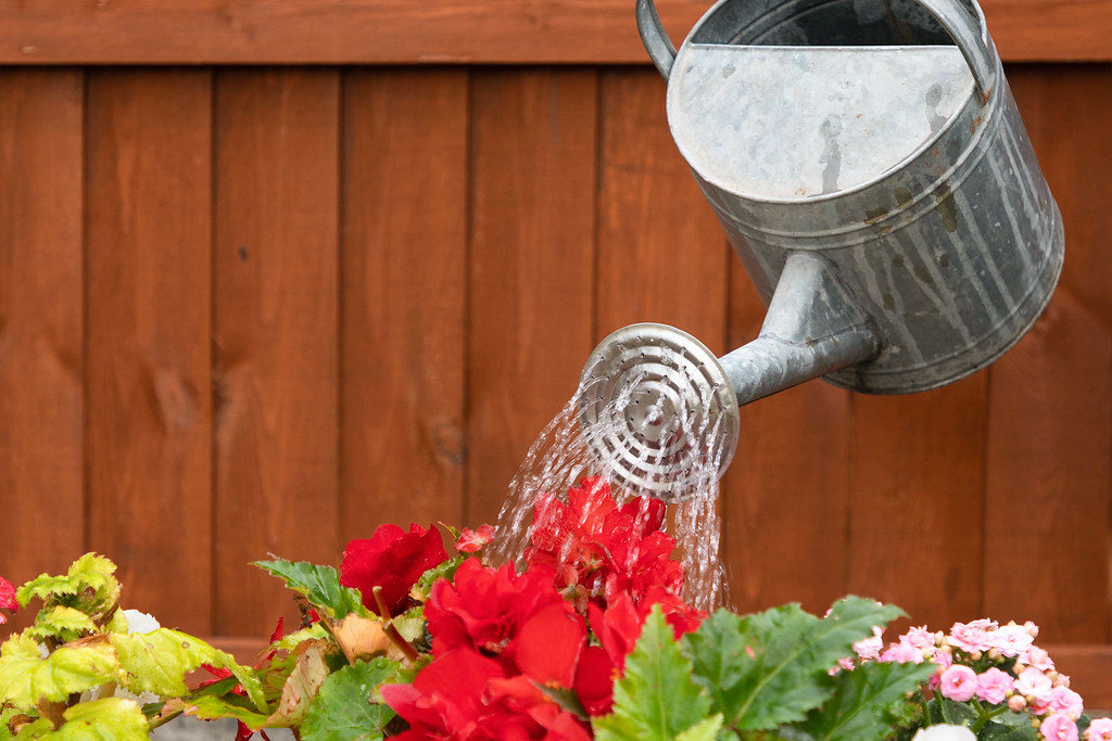 Are You Sure that Plant Needs Water? 5 Signs of Overwatering