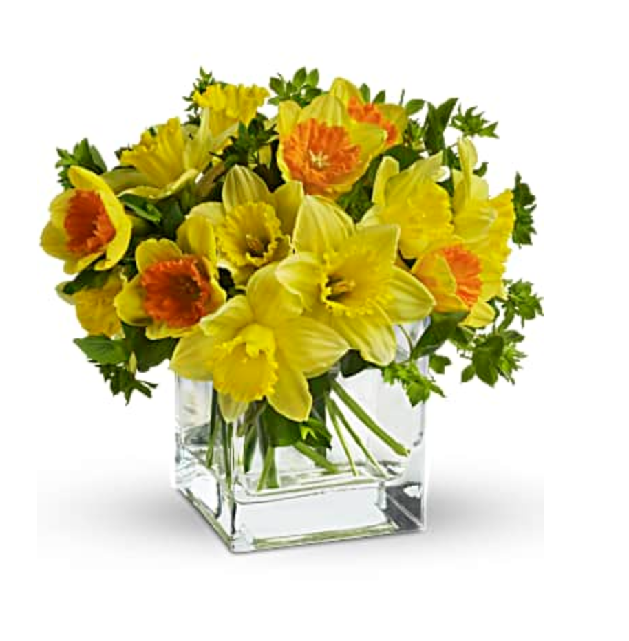 yellow daffodils and greenery in a clear cube vase
