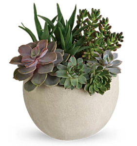Succulent garden in a ceramic pot
