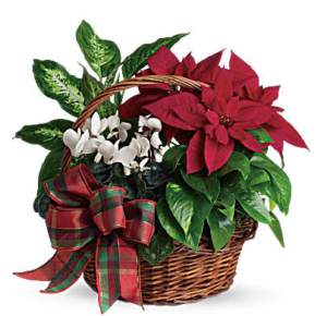 Red poinsettia, green ferns, and more fill a wicker basket
