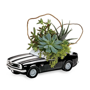 Succulents fill a chevy camaro vase