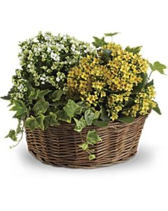 White and yellow flowering plants fill a wicker basket
