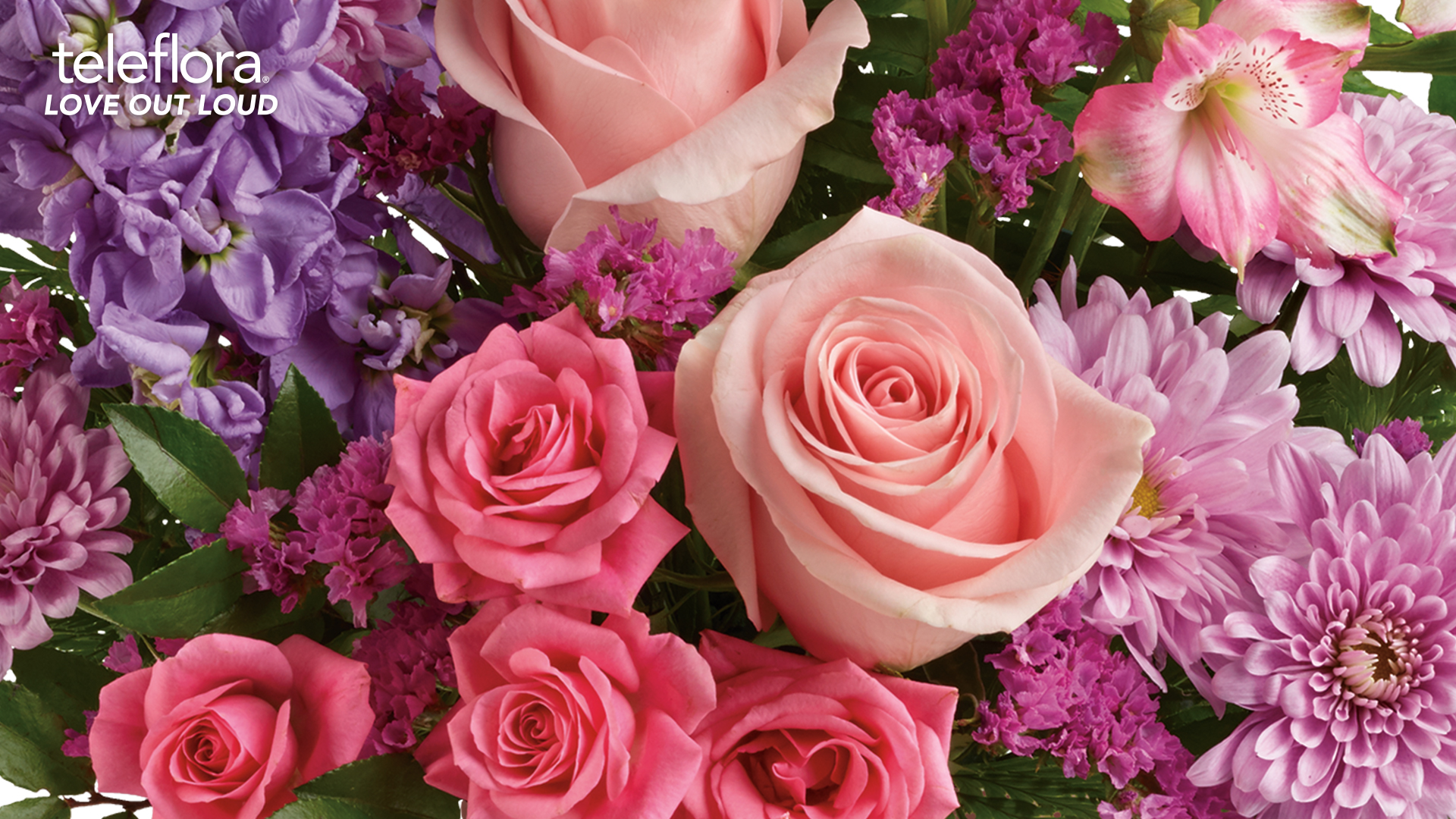 background of light and hot pink roses