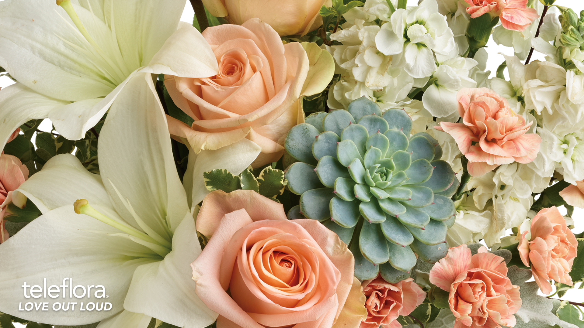 peach roses and succulents background
